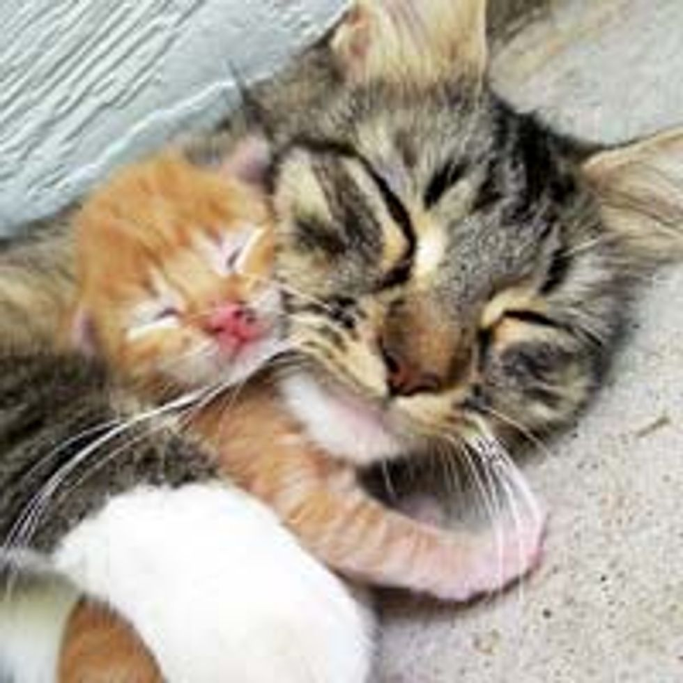 Ginger Kitty Adores His Cat Mama