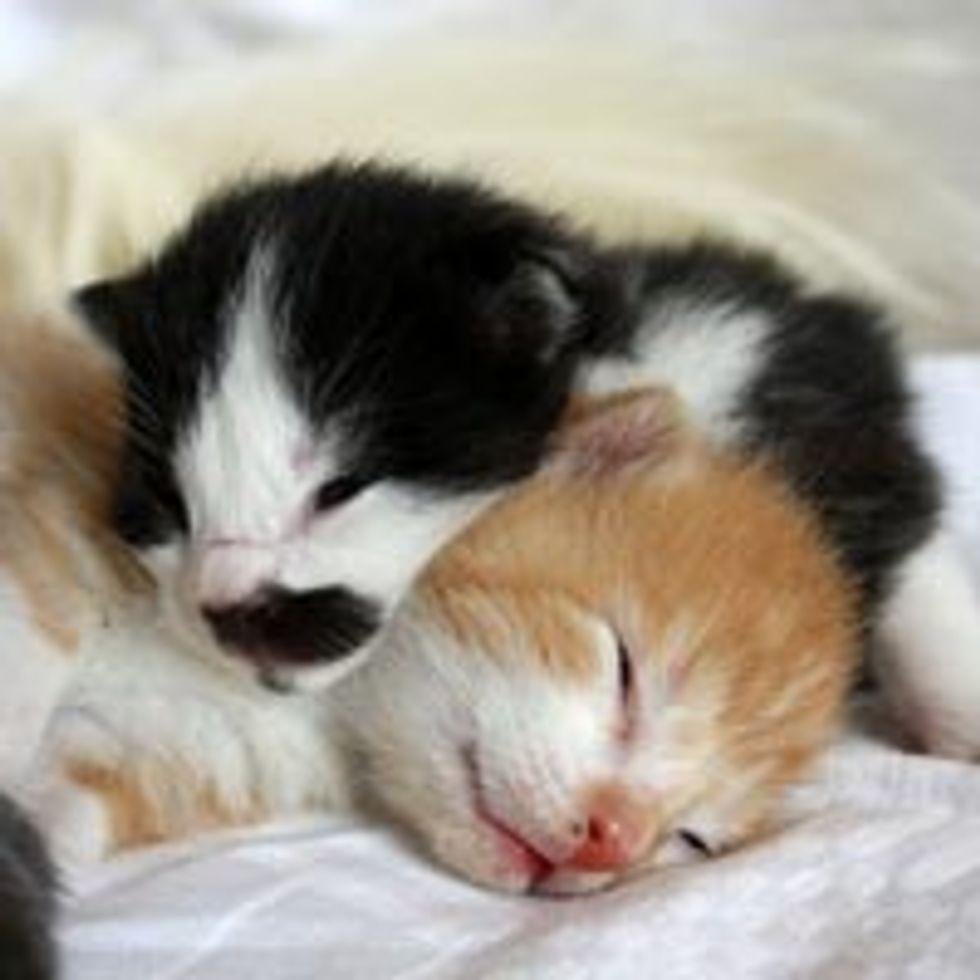Teeny Tiny Kittens Sleep Gravitation