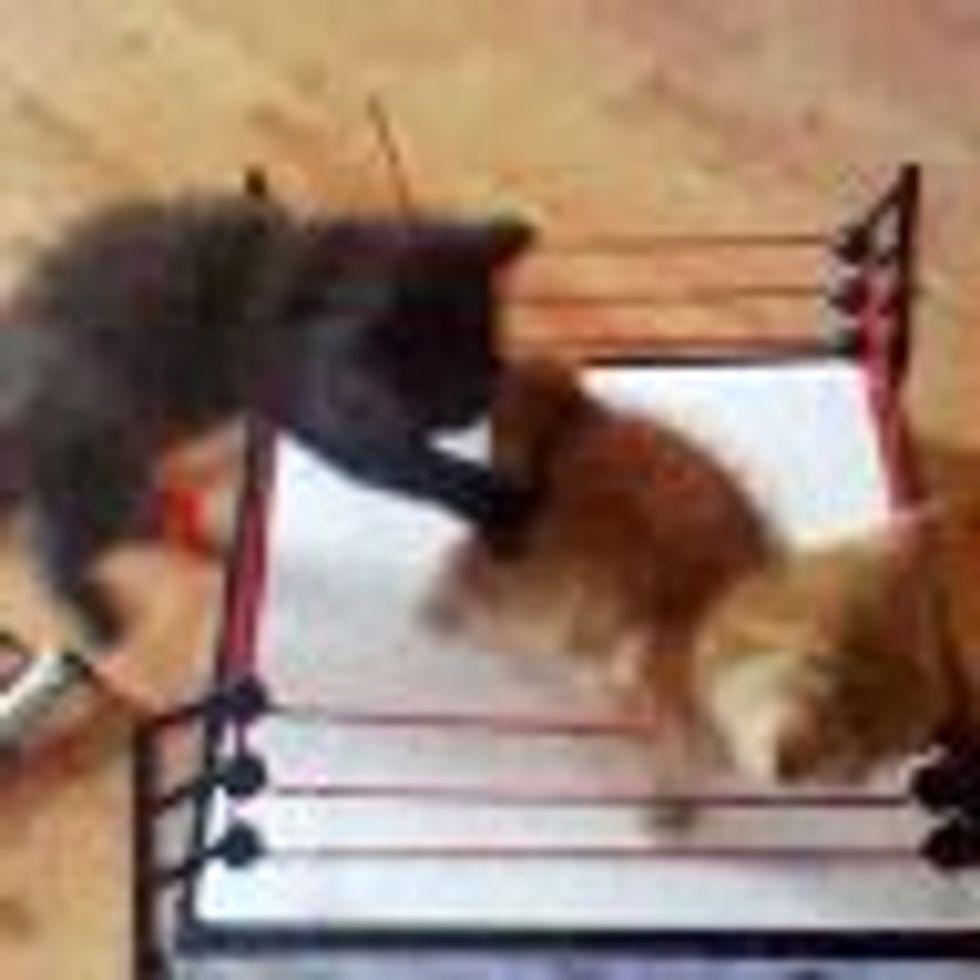 WWE Ultimate Kitty Wrestling