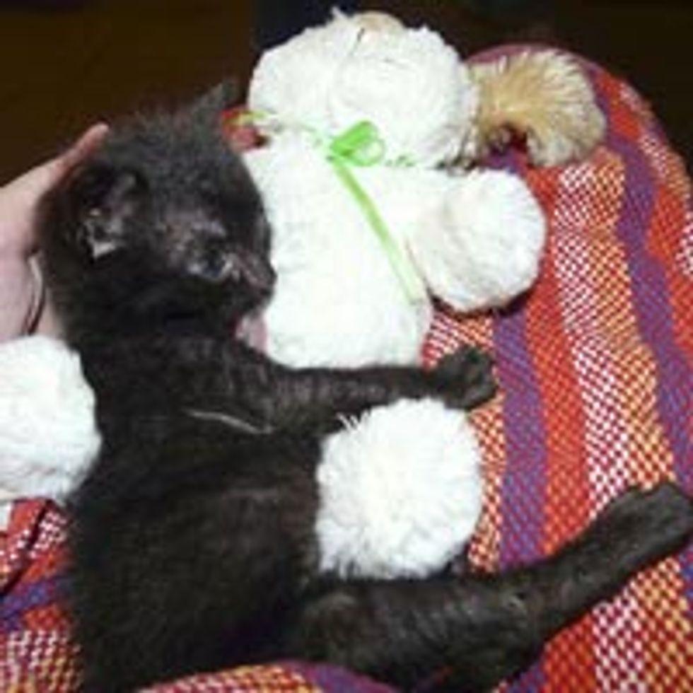Bruno the Little Black Kitty, Big Inspiration