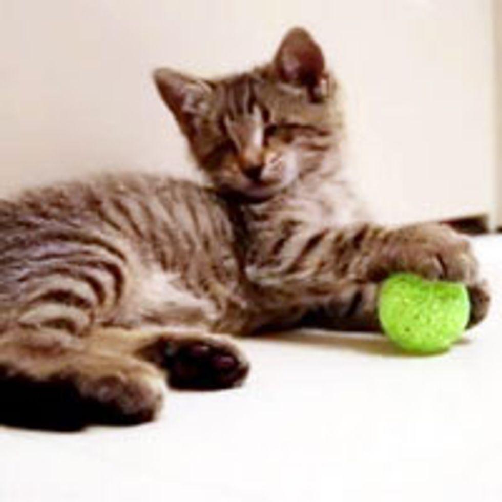 Oskar the Blind Kitty's First Toys