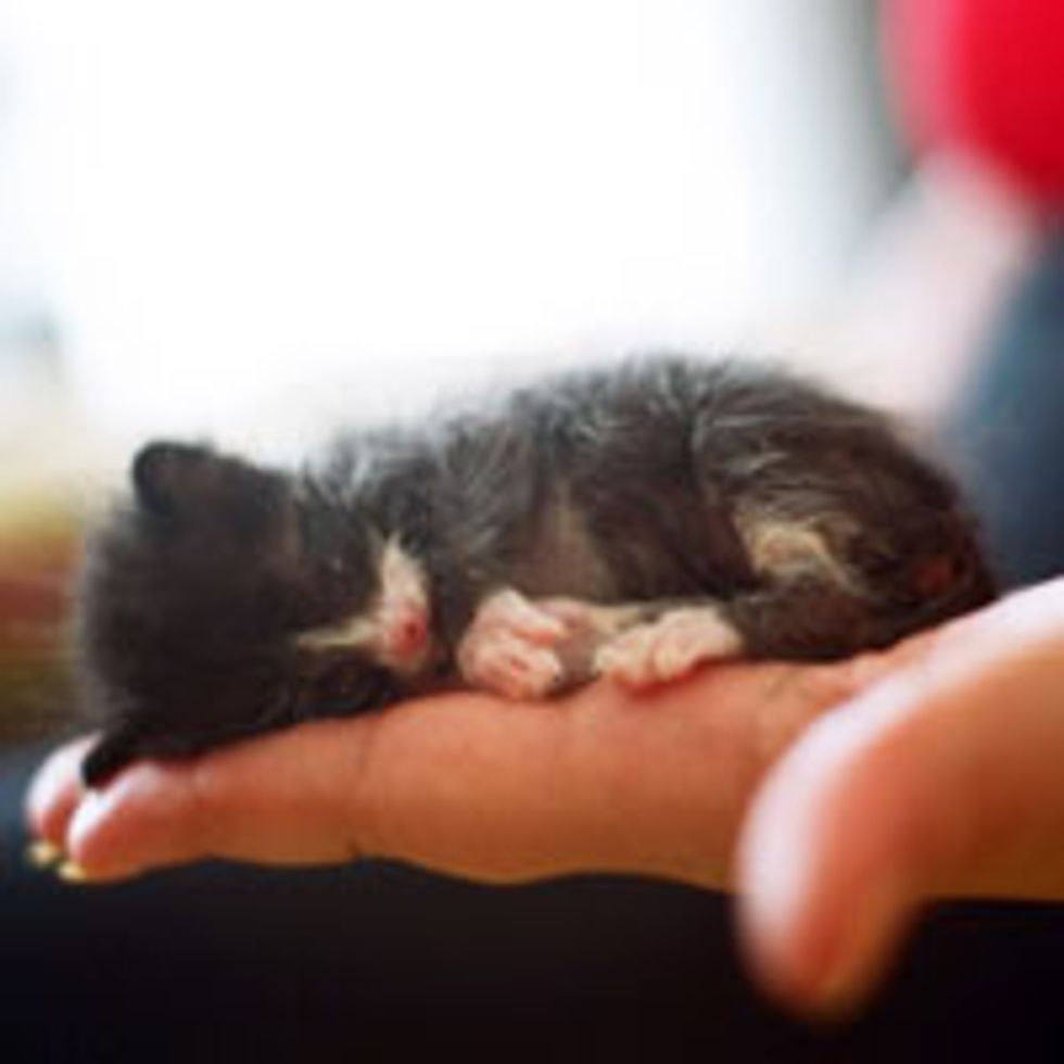 Teeny Tiny Orphan Tuxedo Found Luck