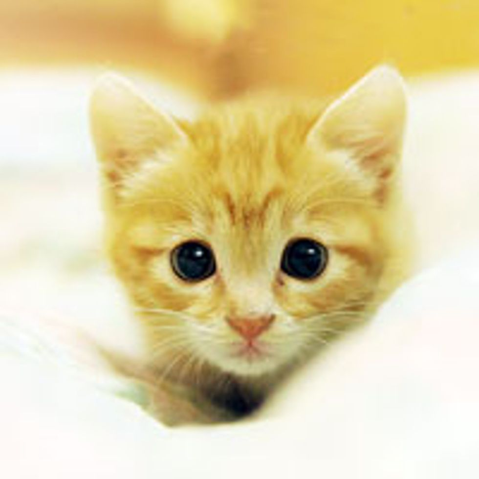 Sweet Feral Ginger Kitty