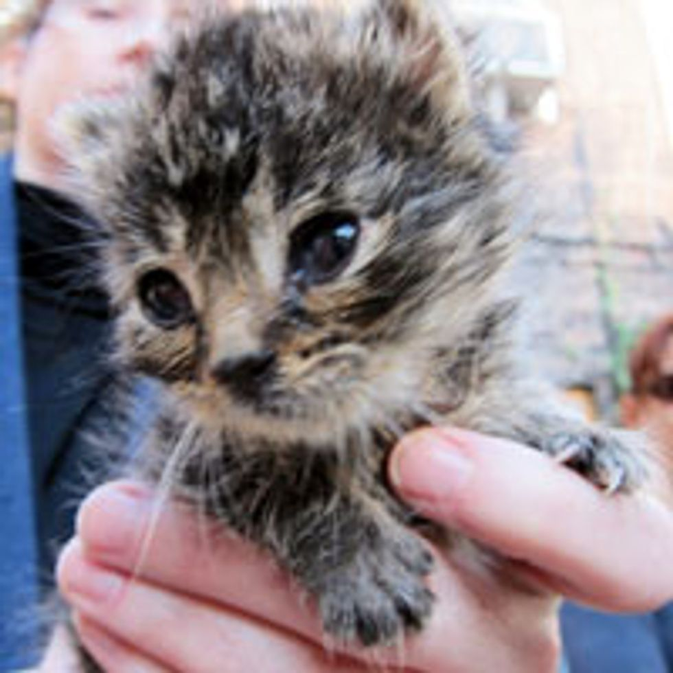 Wee Rescue Tabby Thankful for a Second Chance