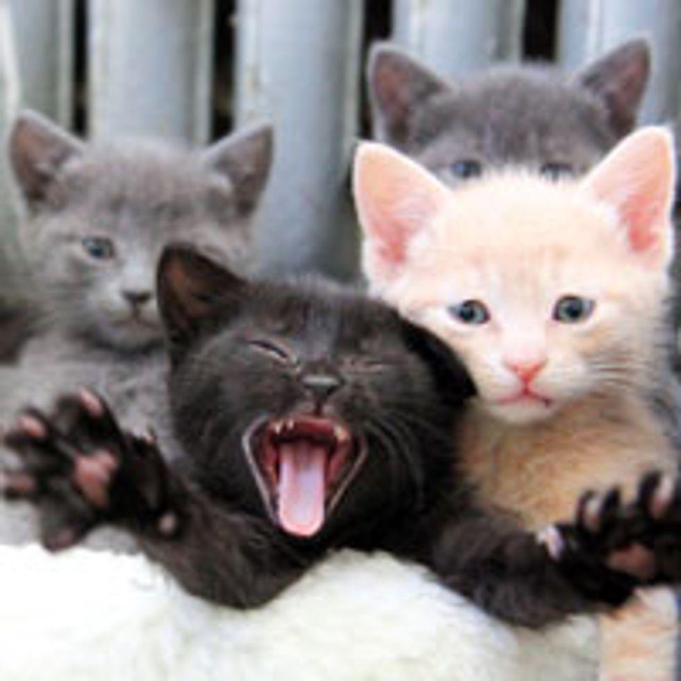 Little Fuzzy Furry Family