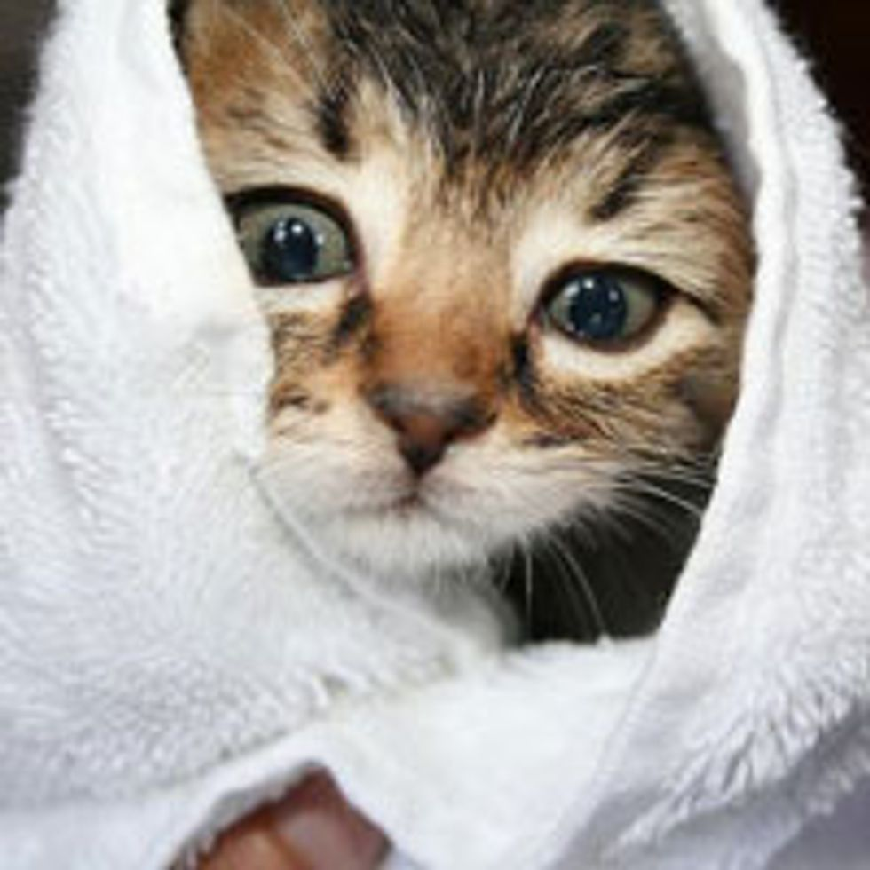 Rescue Tabby Gets All Cleaned Up