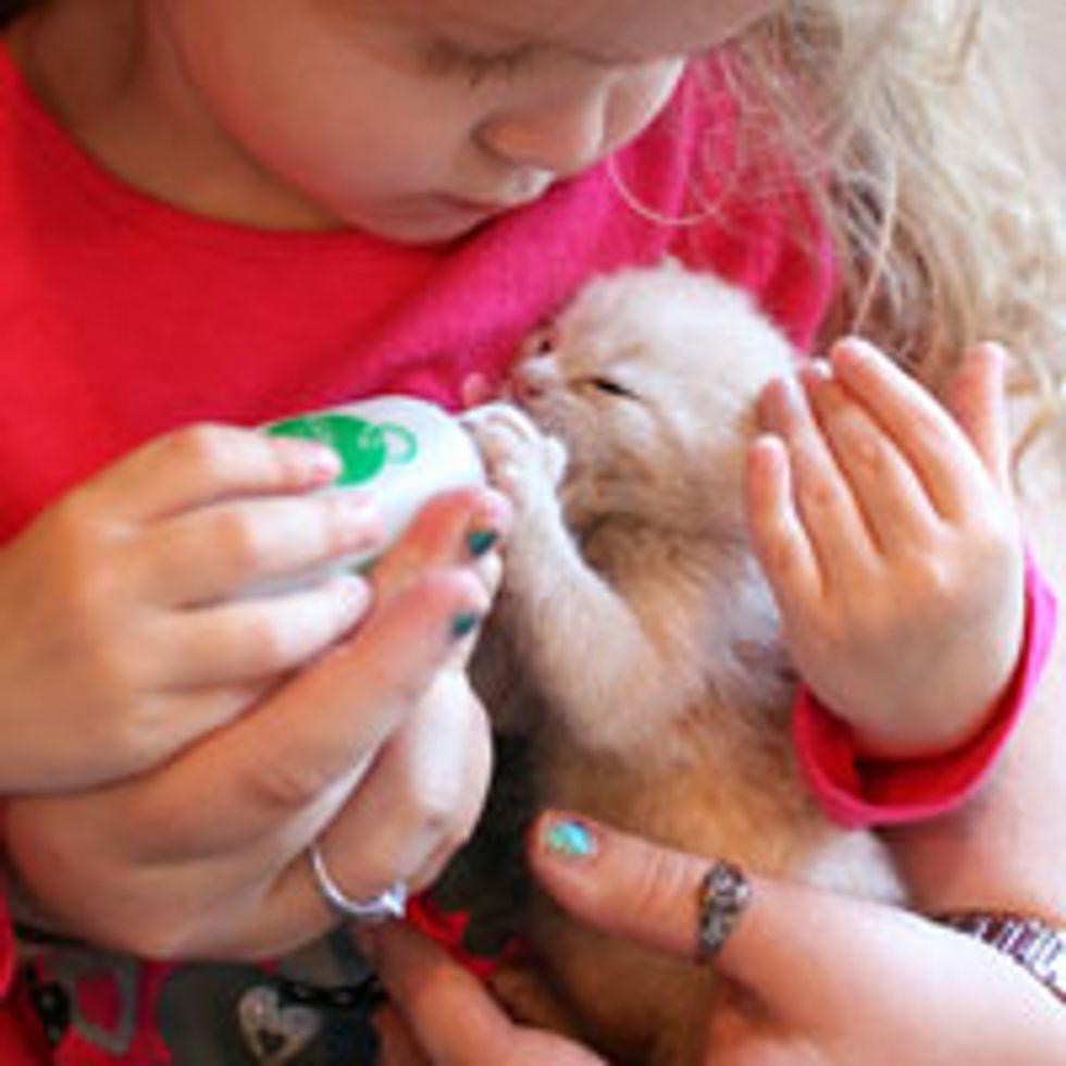 Little Girl Bottle Feeds an Abandoned Kitten