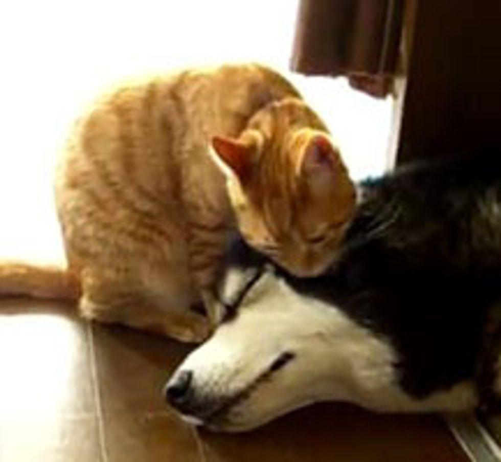 Kitty Gives Sleepy Doggie a Bath