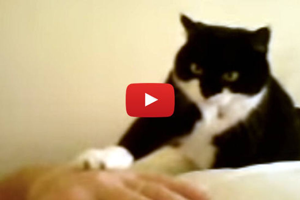 Kitty Alarm Wake-up Call