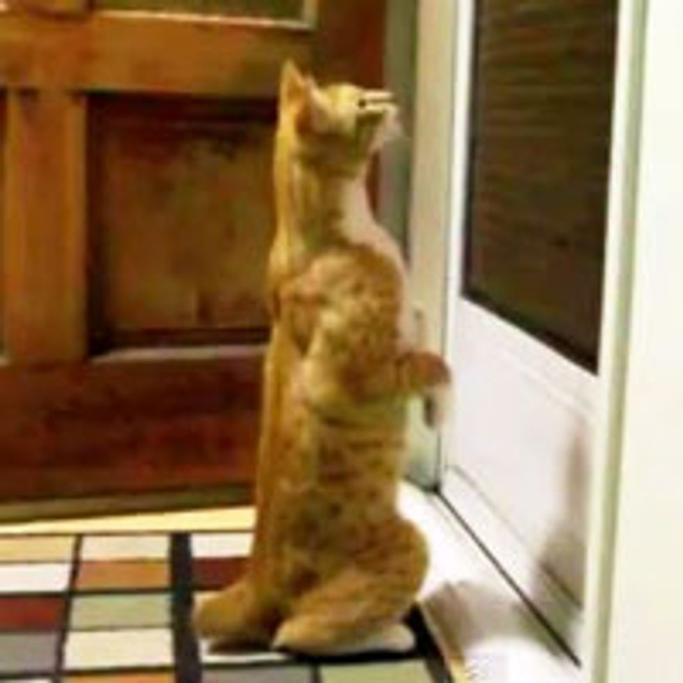 Kitty with Big Mittens Finds His Pet June Bug