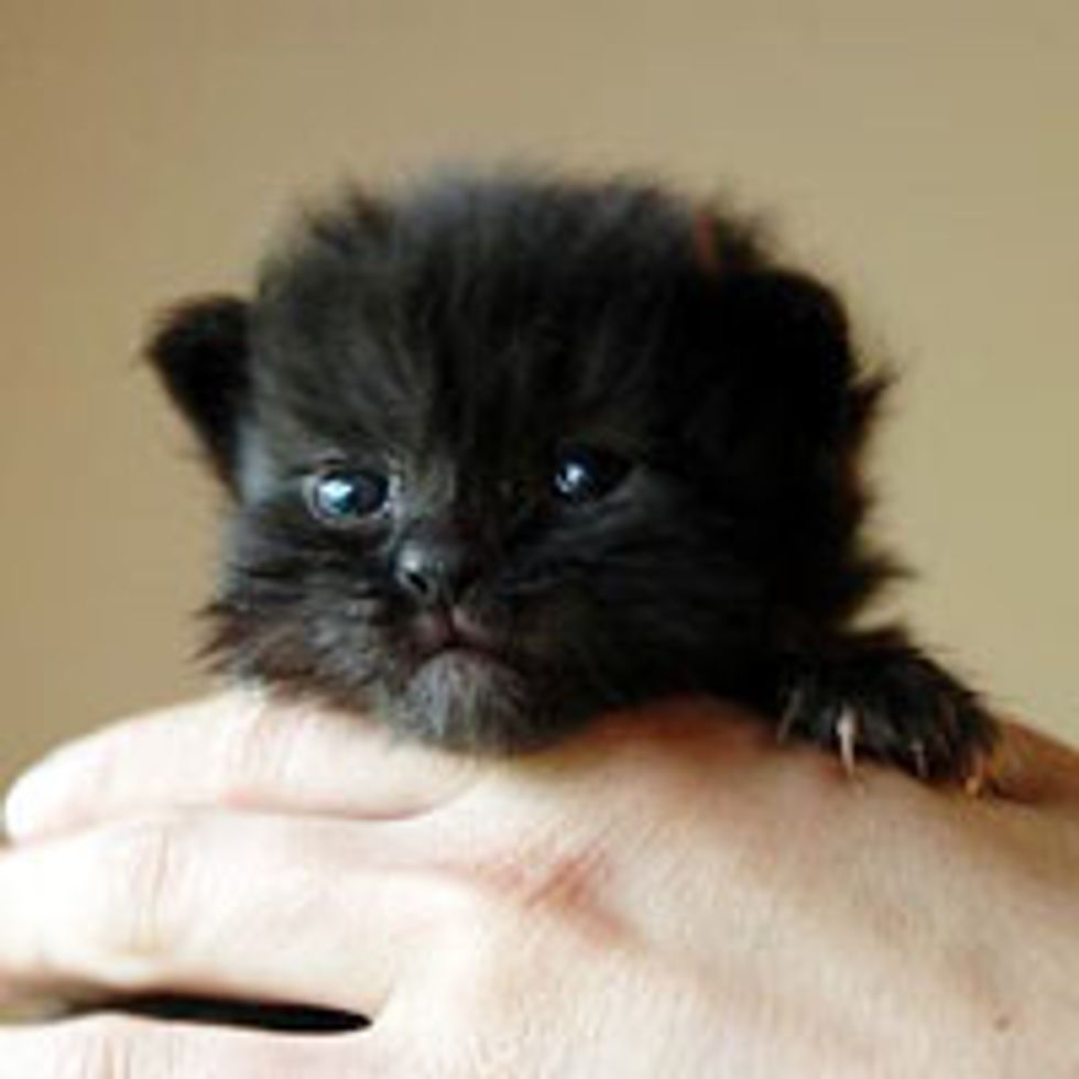 Tiny in Size, Big in Purrsonality