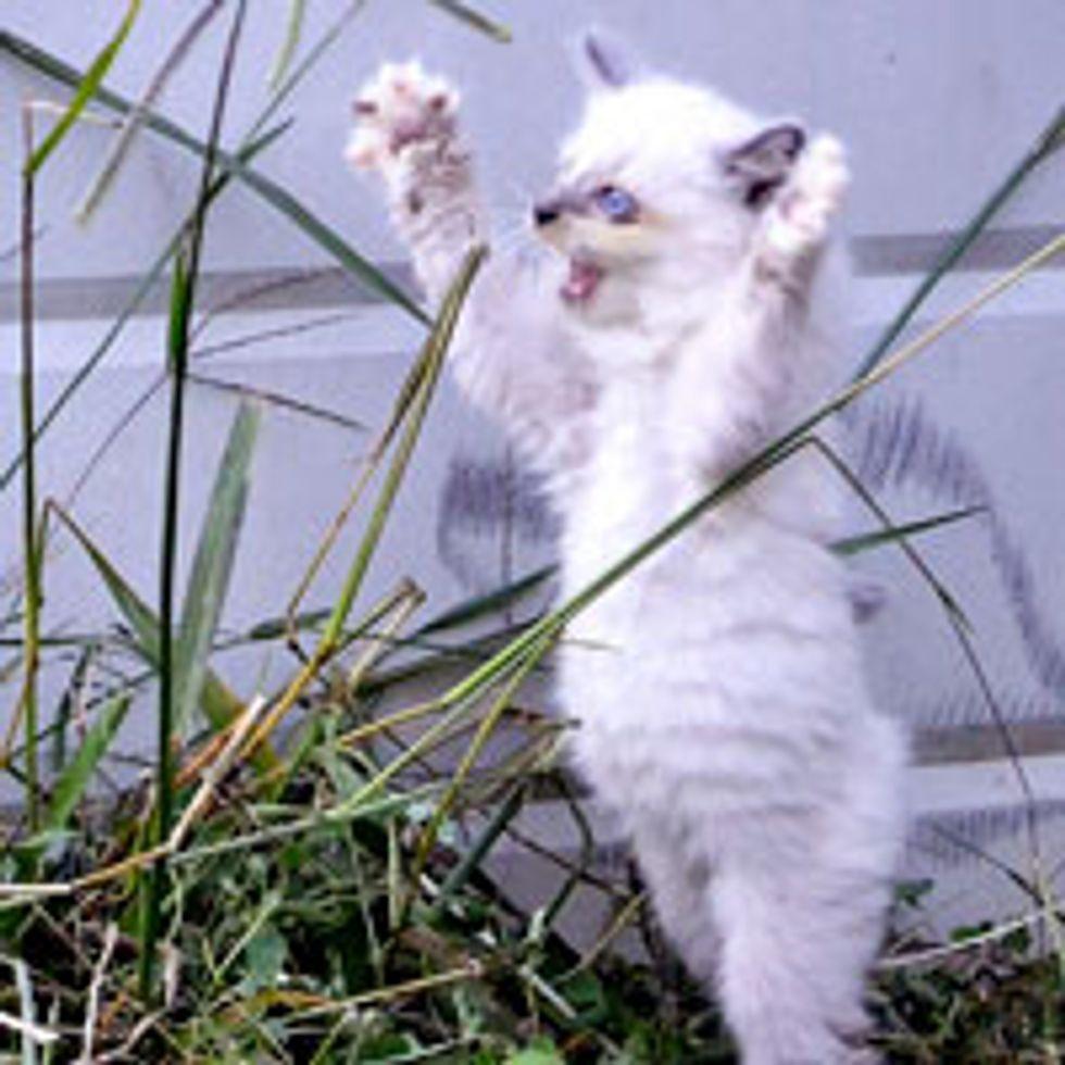 Captain Jack Feral Born Kitty Has a Happy