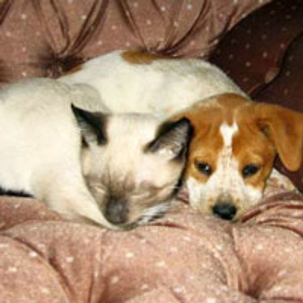 Unlikely Friendship of Cat and Dog, Then and Now