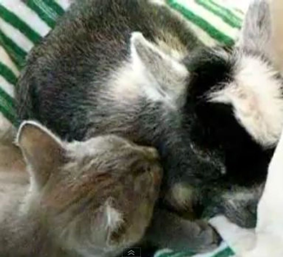 Kitty Gives Baby Goat a Bath