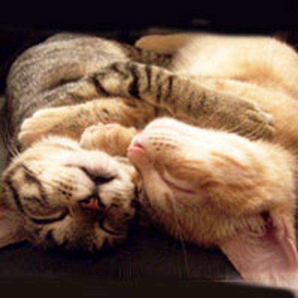 Synchronized Kitties