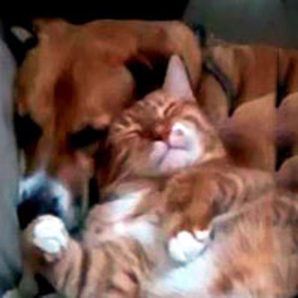 Kitty Gives Doggie Love Attack