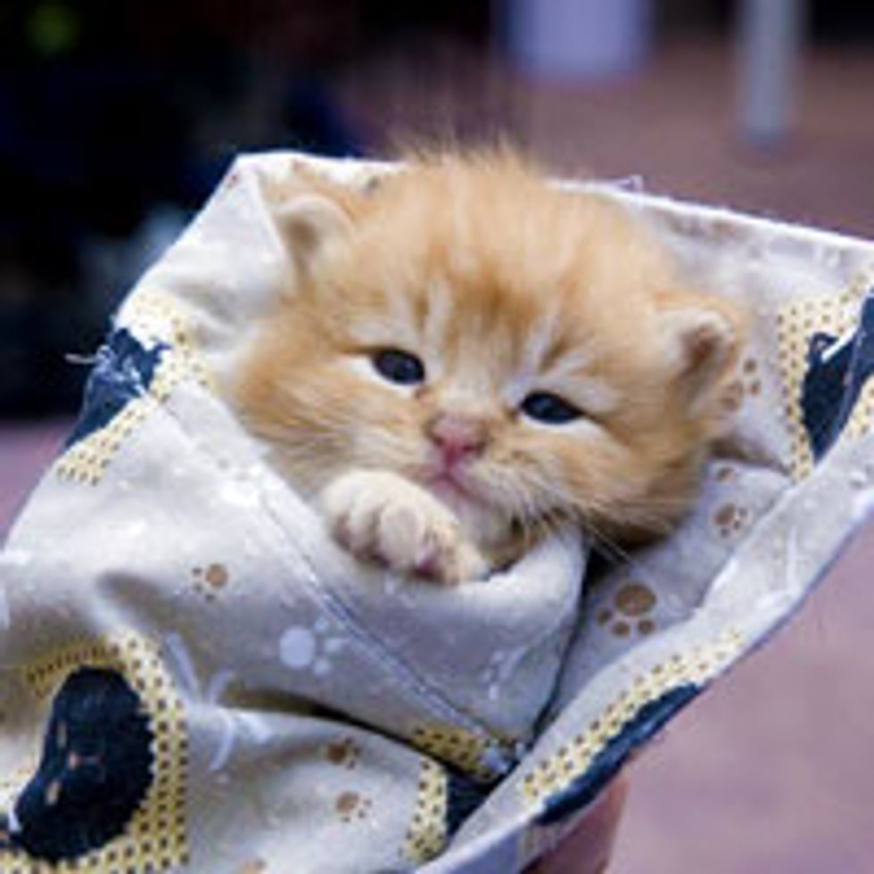 Tiny Bitty Bundle of Ginger Cute