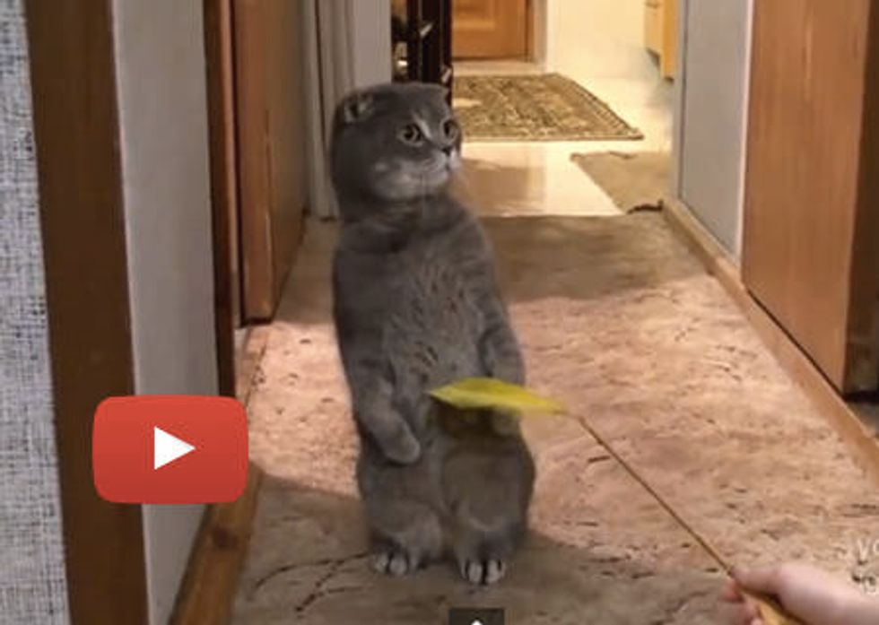 Kitty Interrupted by Door Bell