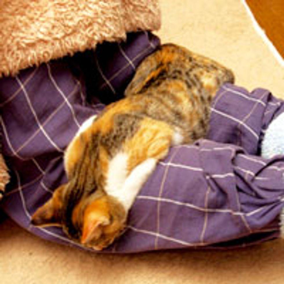 Sleepy Kitty Melts to Sleep