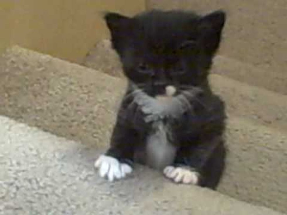 Kittens' First Time Up Stairs