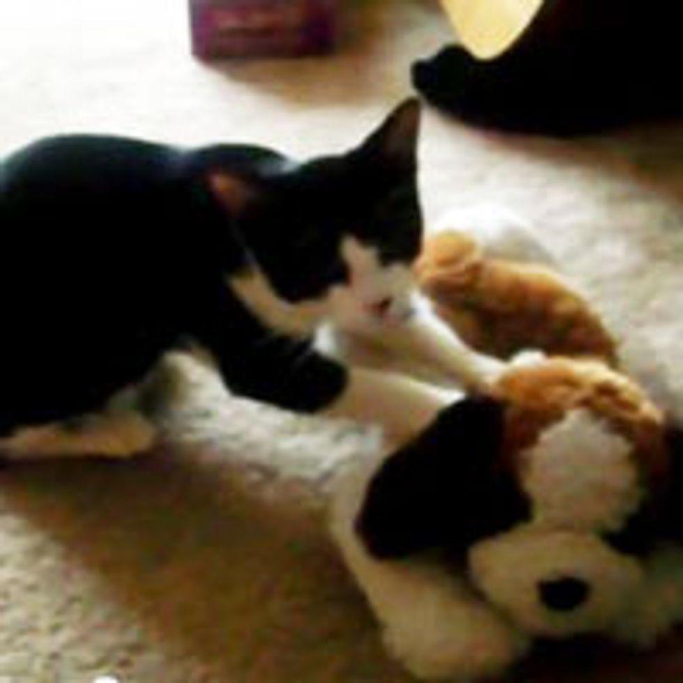 Kitty Gives Plushy Pal Massage