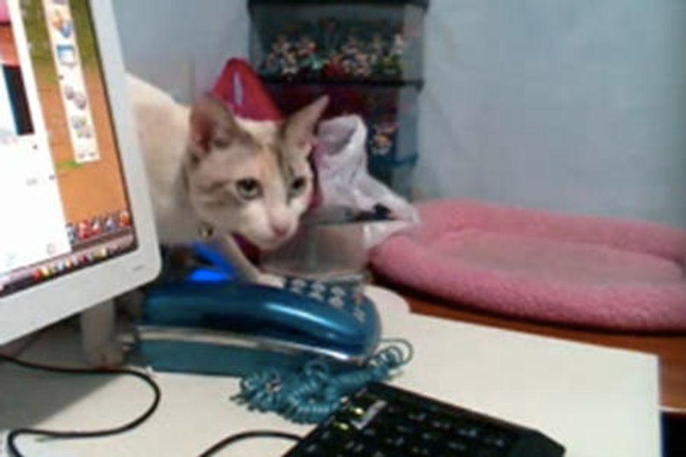 Kitty Hangs Up Phone Calls