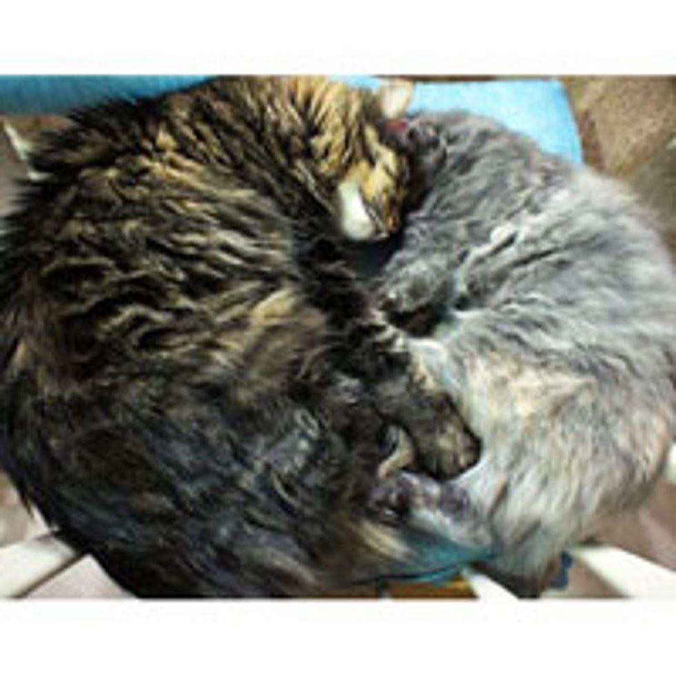 Best Furiends Keeping Each Other Warm Through Winter