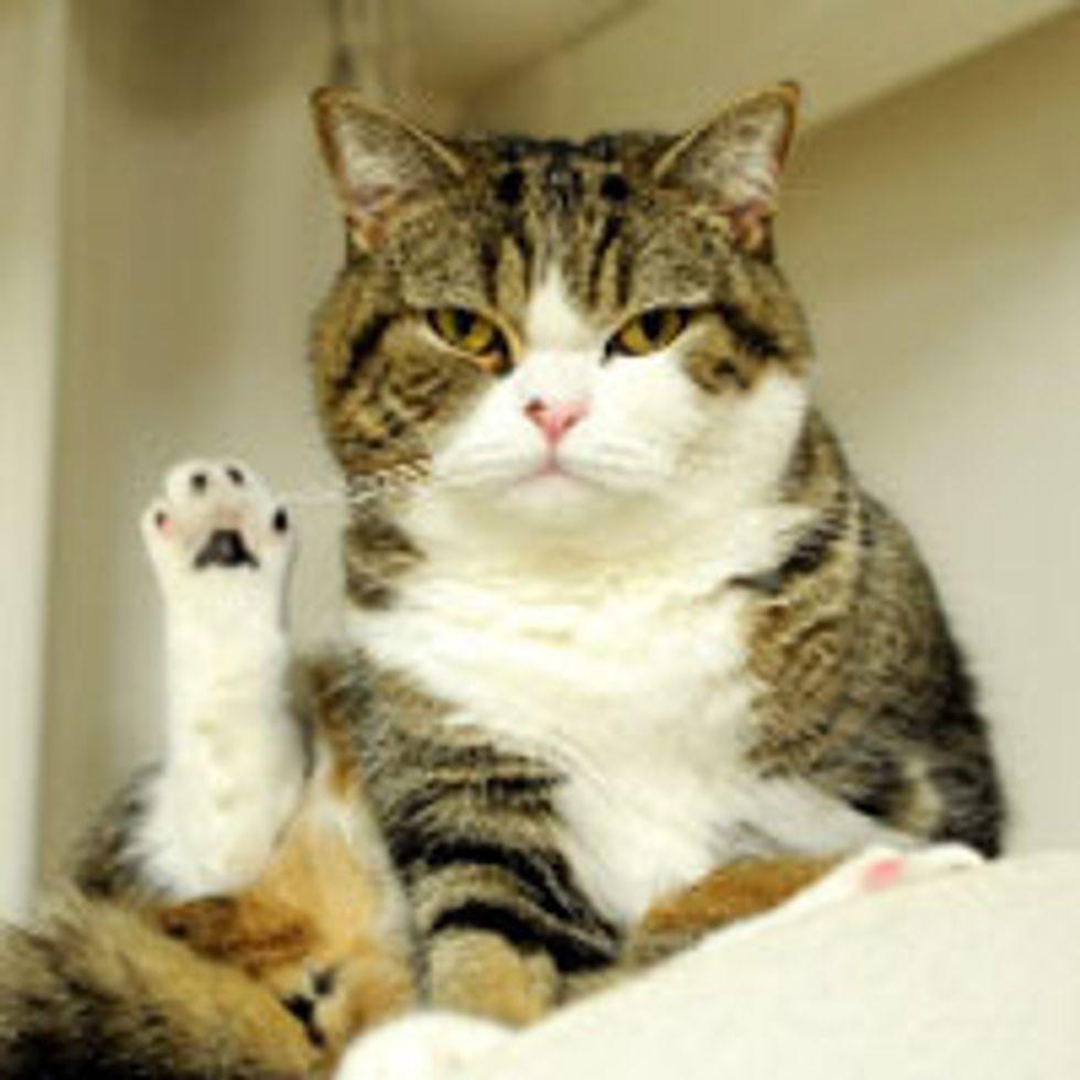 Maru Says 'Talk to the Paw!'
