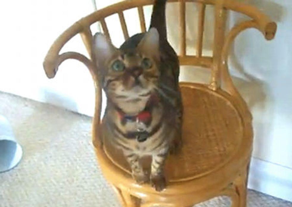 Kitty Does Amazing Tricks
