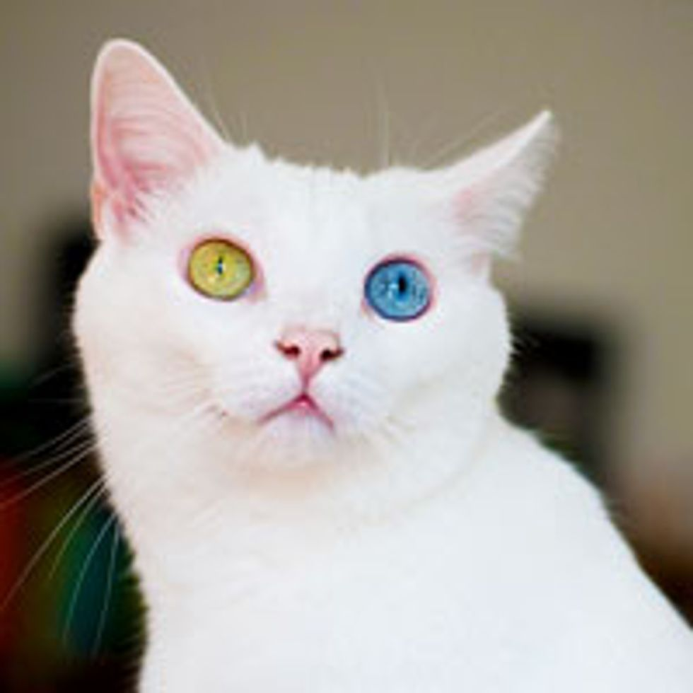June the Odd-eyed Beauty