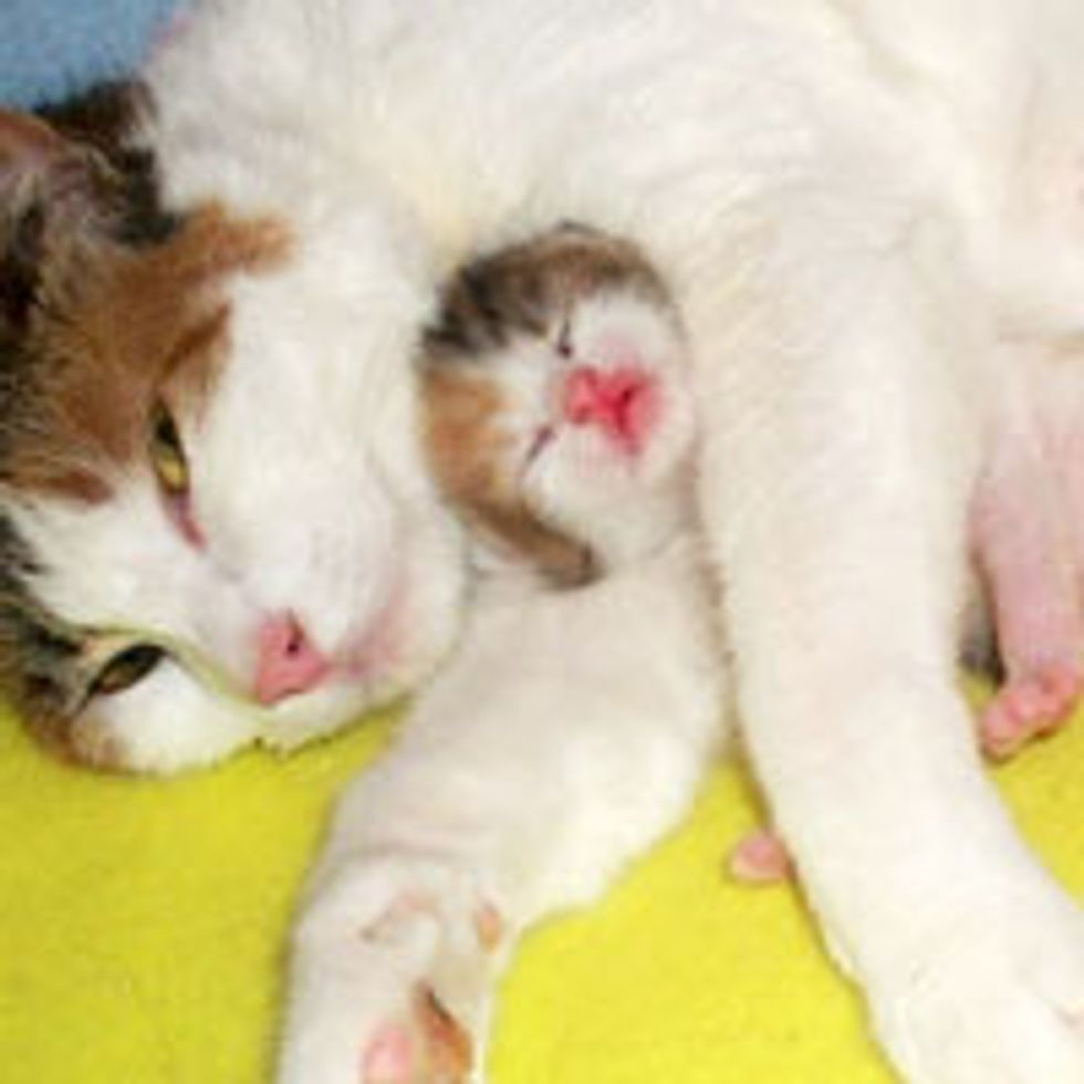 Protective Cat Mama Cuddles Her Kitten with Unconditional Love