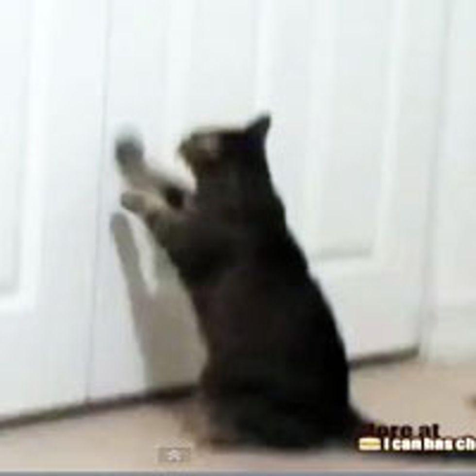 Smart Cat Opens Closet Door