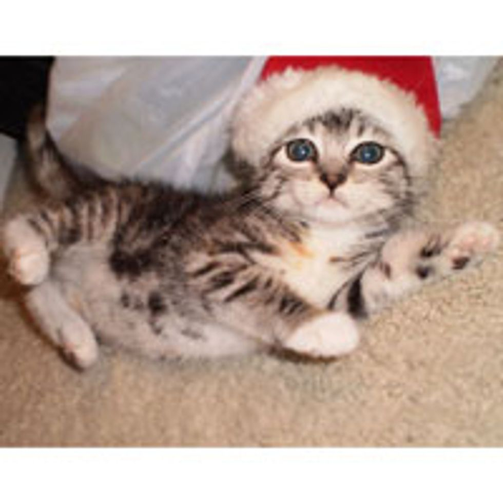 Santa Kitty is Coming to Town! Merry Christmas!