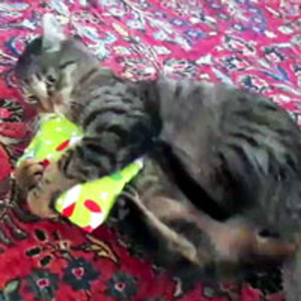 Kitty Opens His Christmas Present!