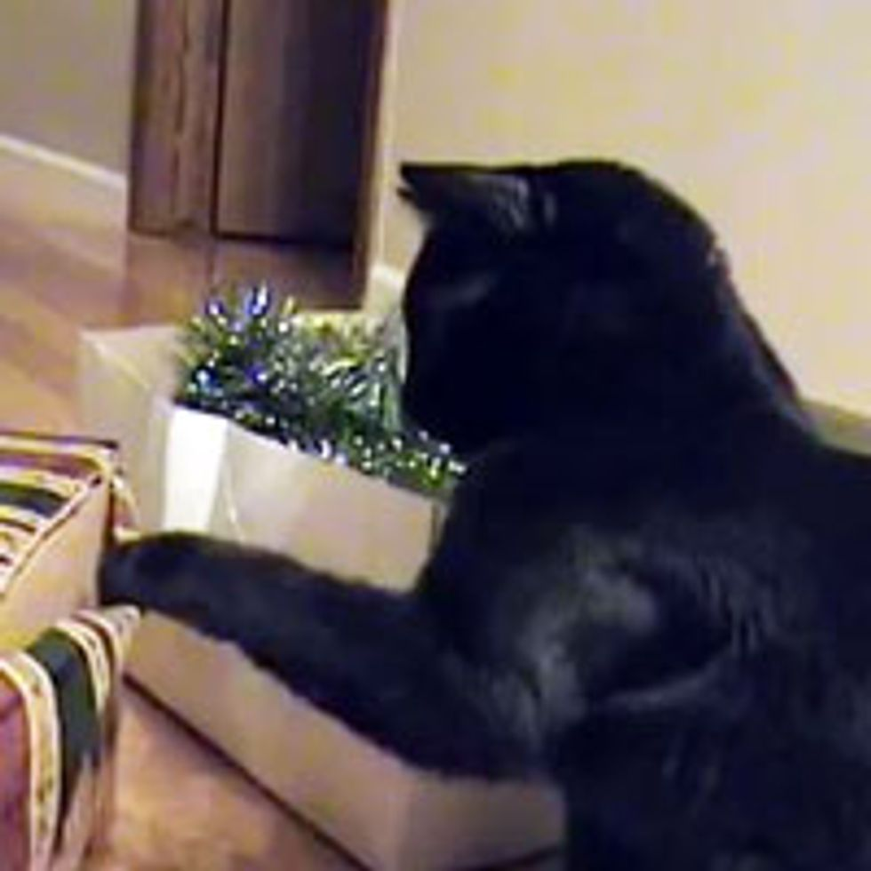 Kitties Christmas Decoration Bonanza