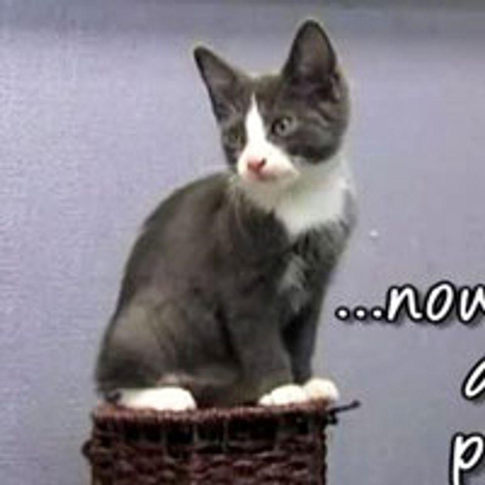Online Pet Shelter