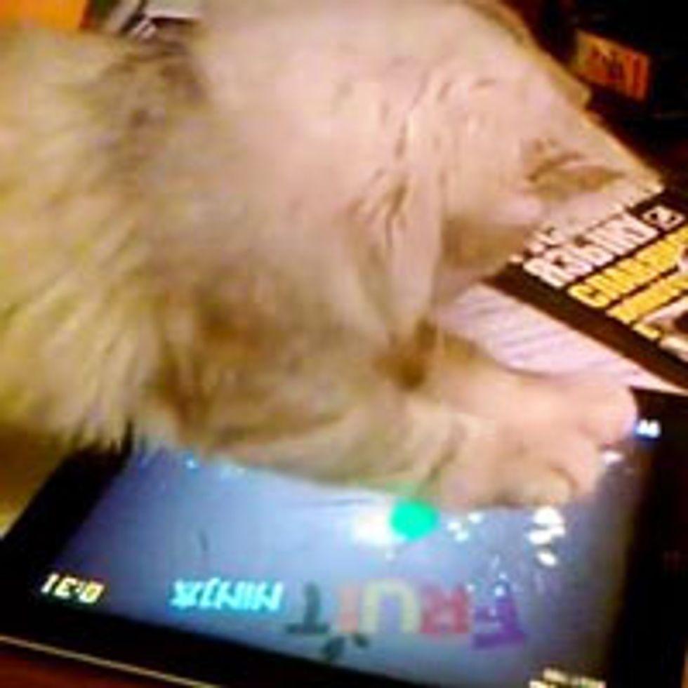 Kitty Plays 'Fruit Ninja'