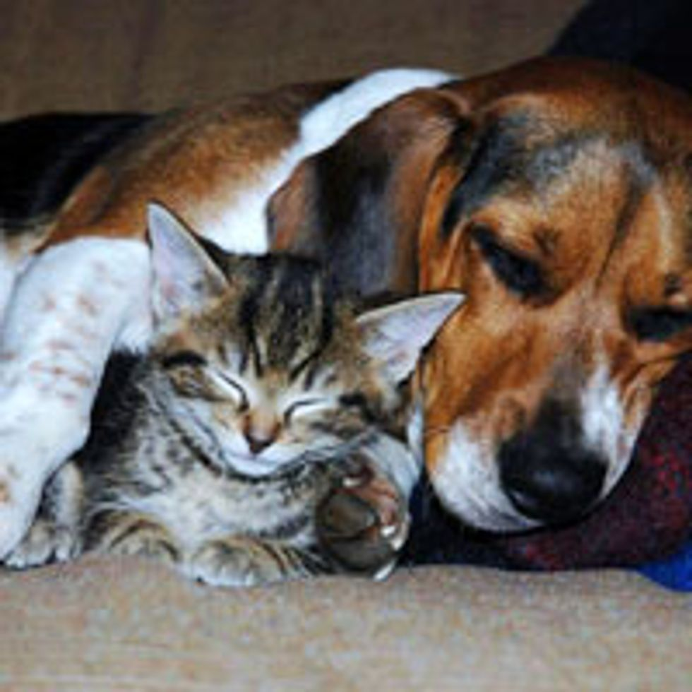 Tabby Kitty Adopted by Dog, Best of Friends