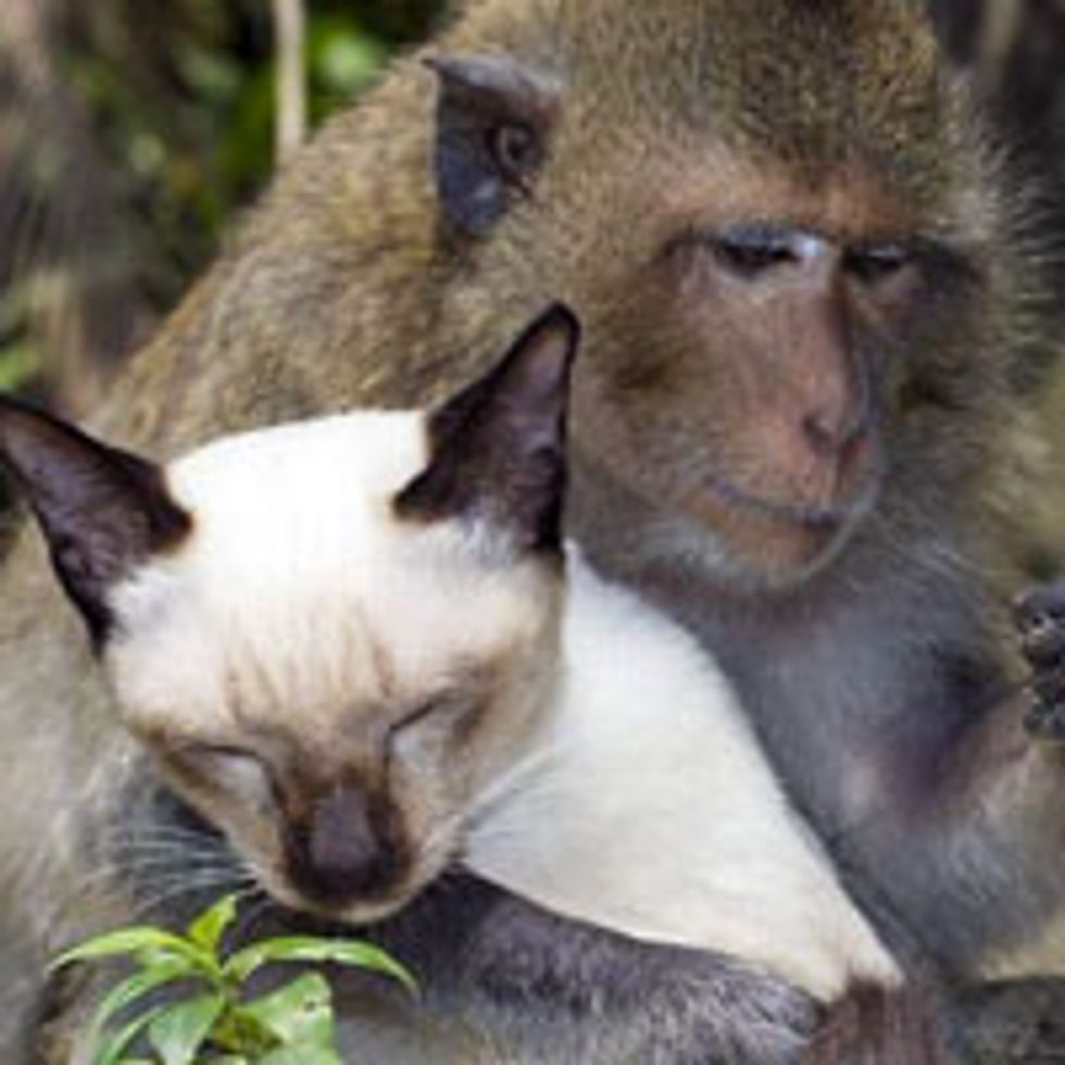 Interspecies Love Between Cat and Monkey