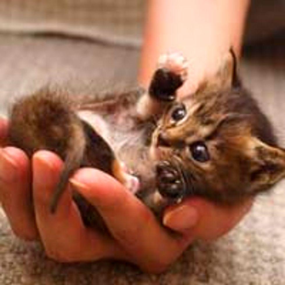 Teeny Tiny Handful of Cute