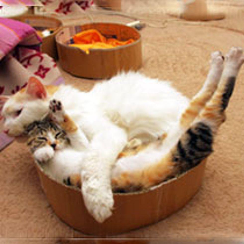 Halp! I am Trapped by a Hug!