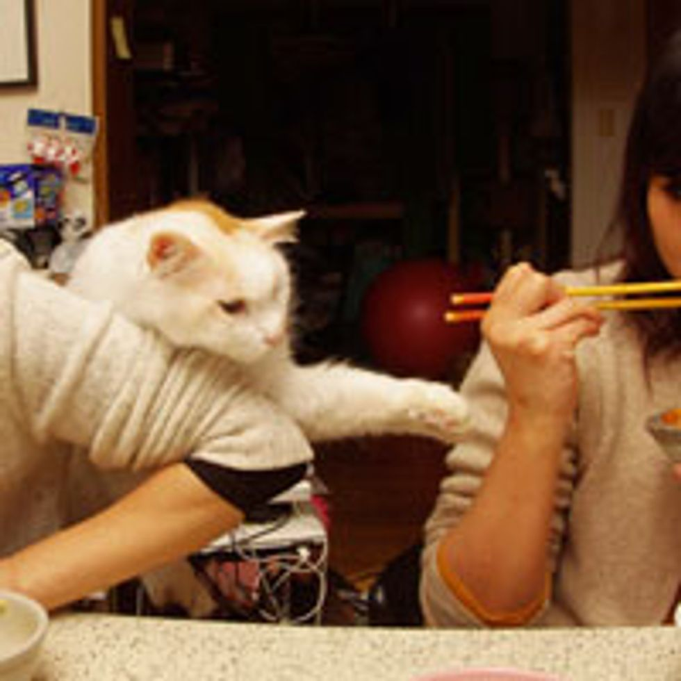 Kitty Supervises Hooman's Dinner