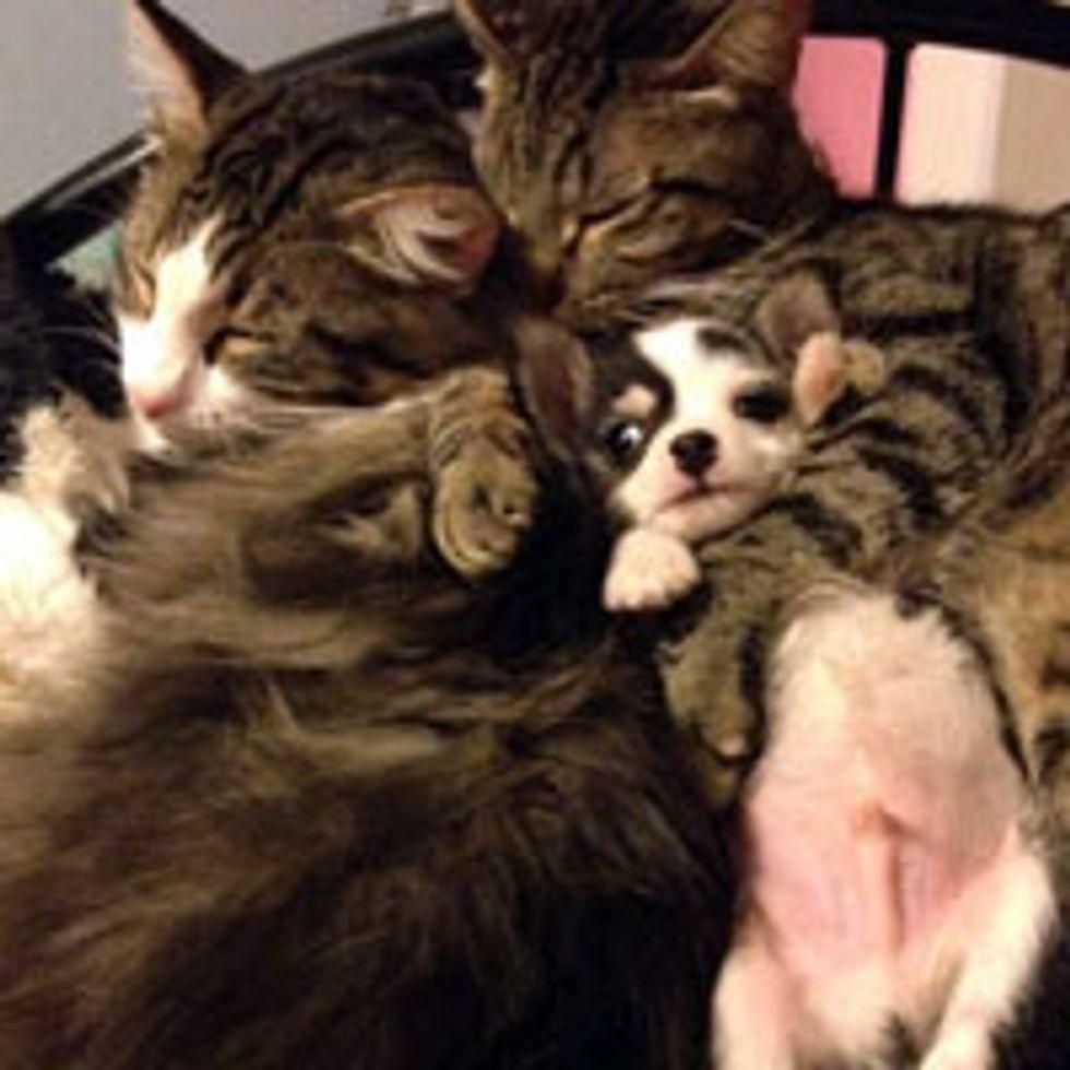 Puppy Got a Cat Mama and Papa