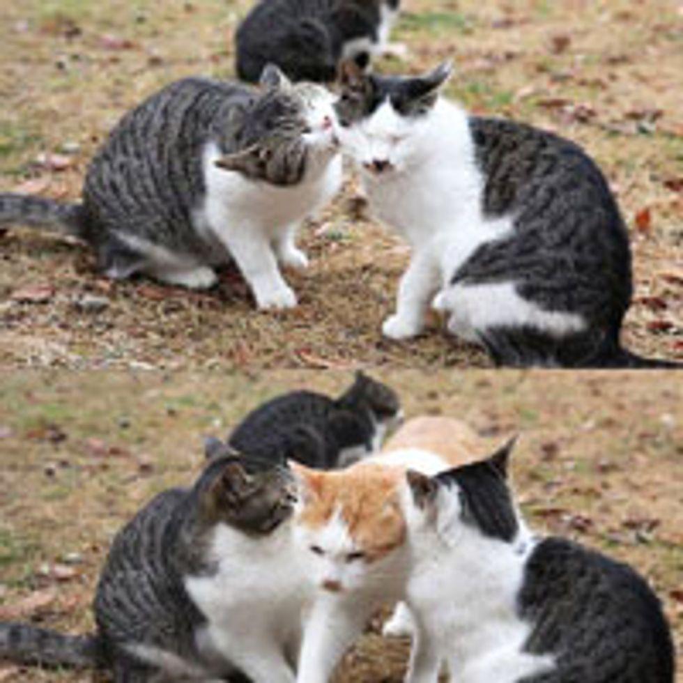 The Third Wheel Cat