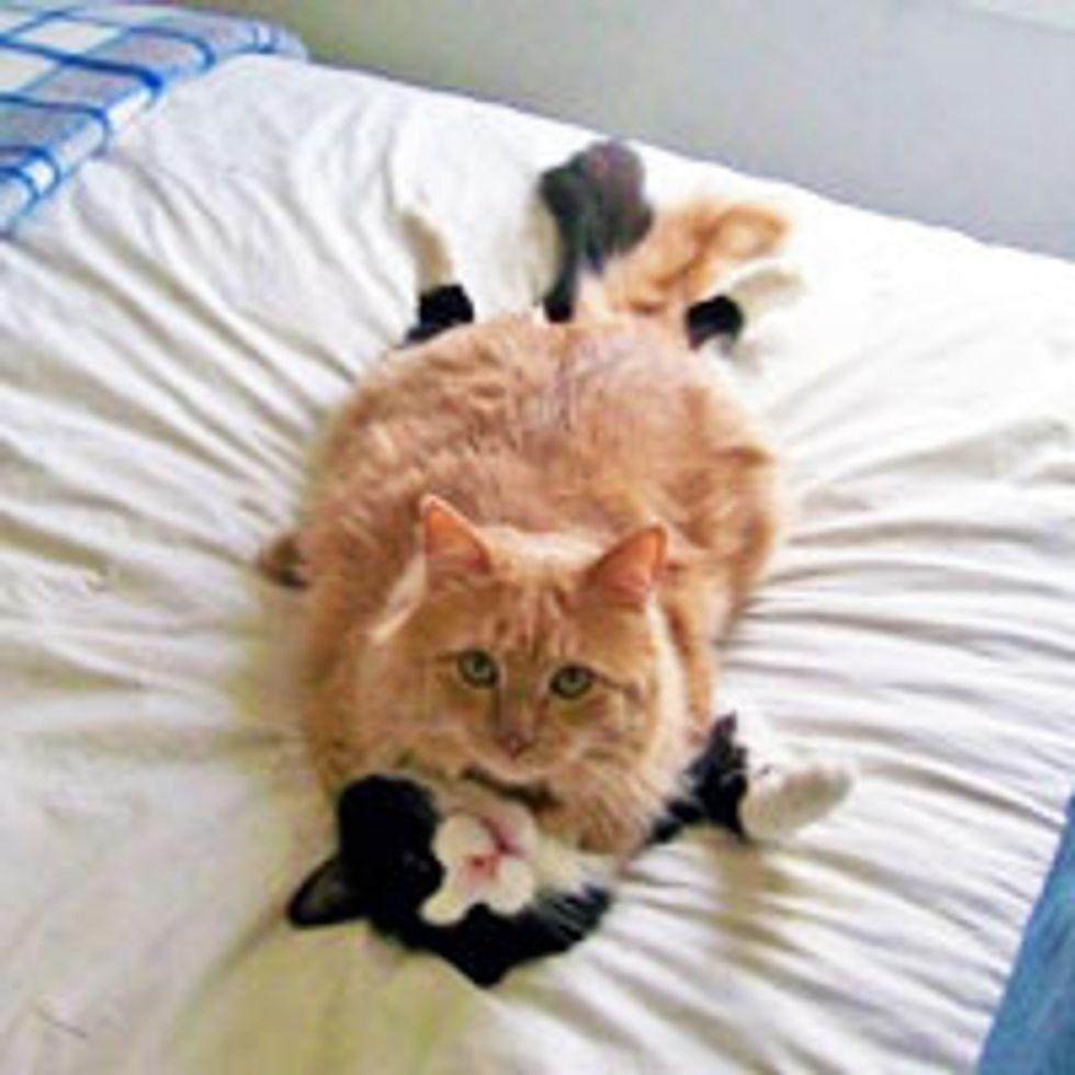 Kitty Wrestling