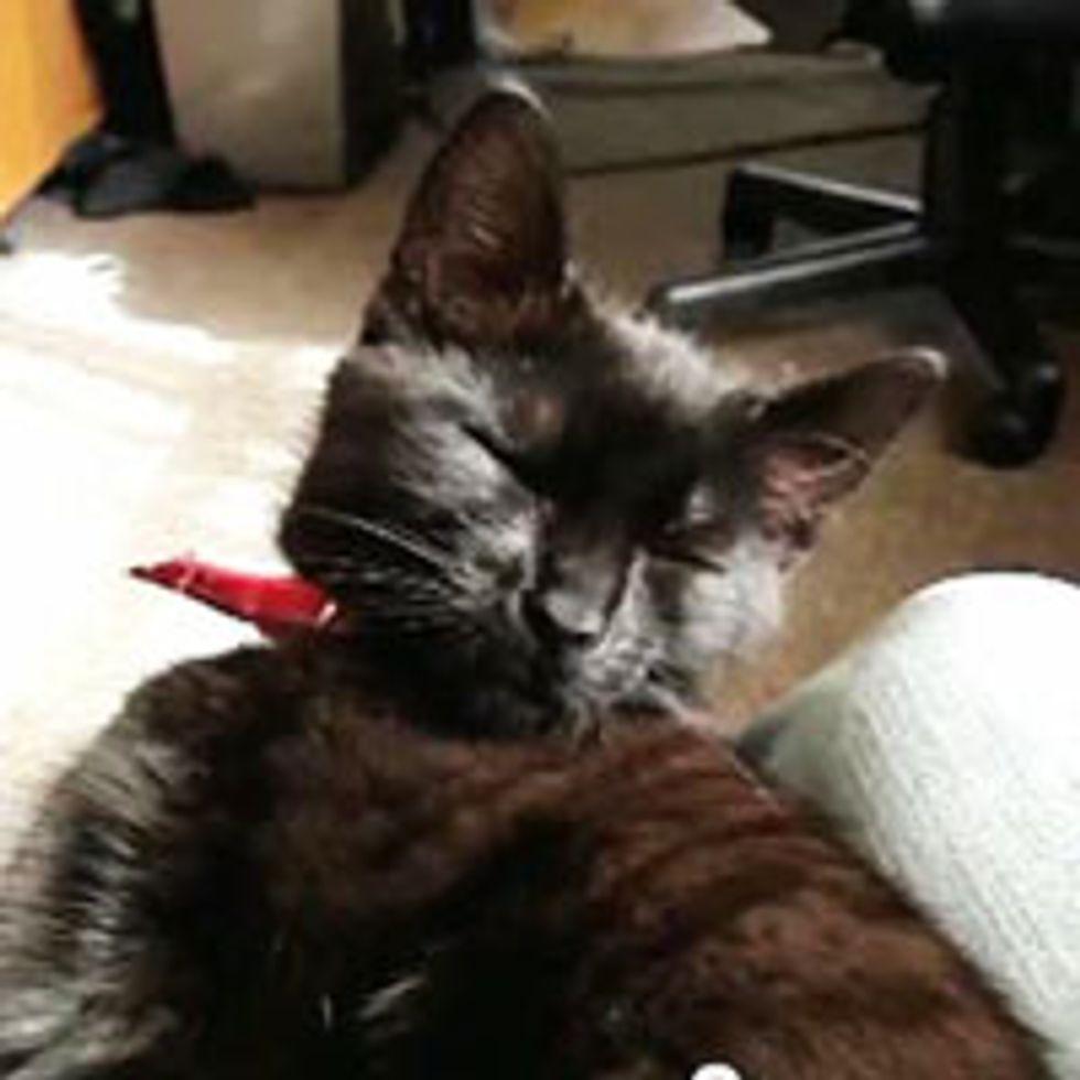 Sleepy Kitty Trying to Stay Awake