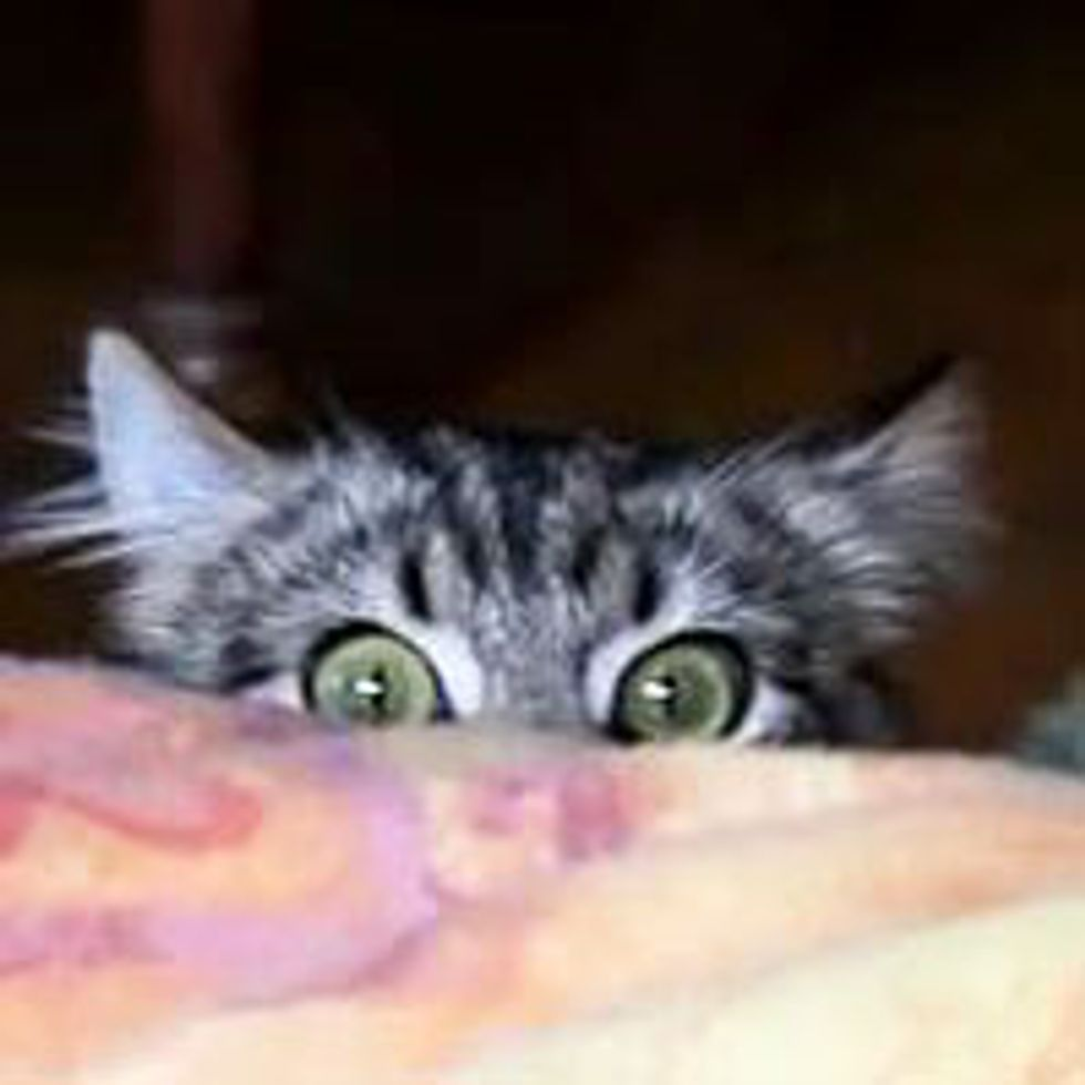Kitty is Watching...