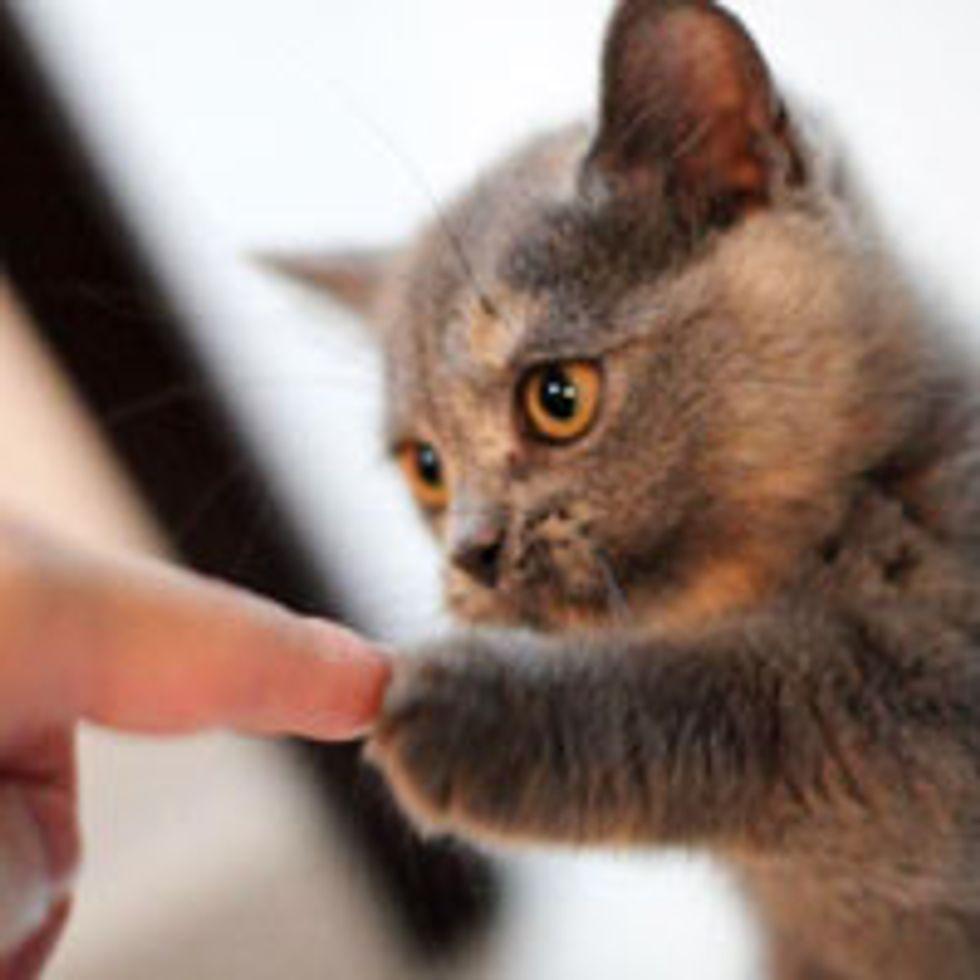 Hold My Paw!