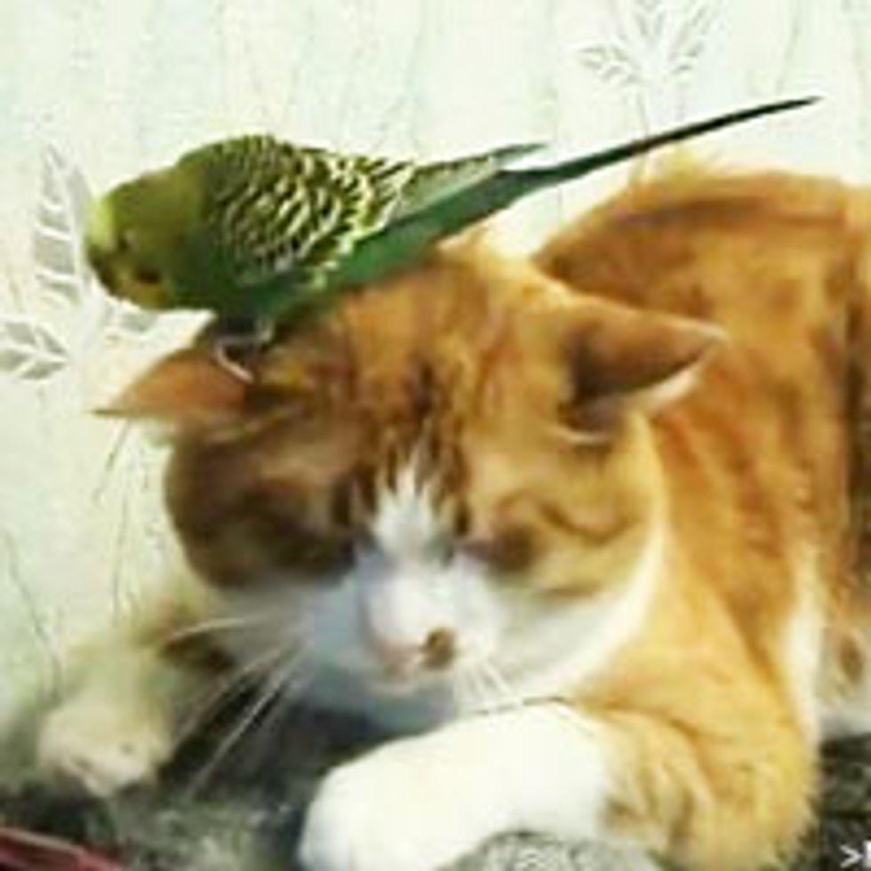 Sleepy Kitty with Bird Hat