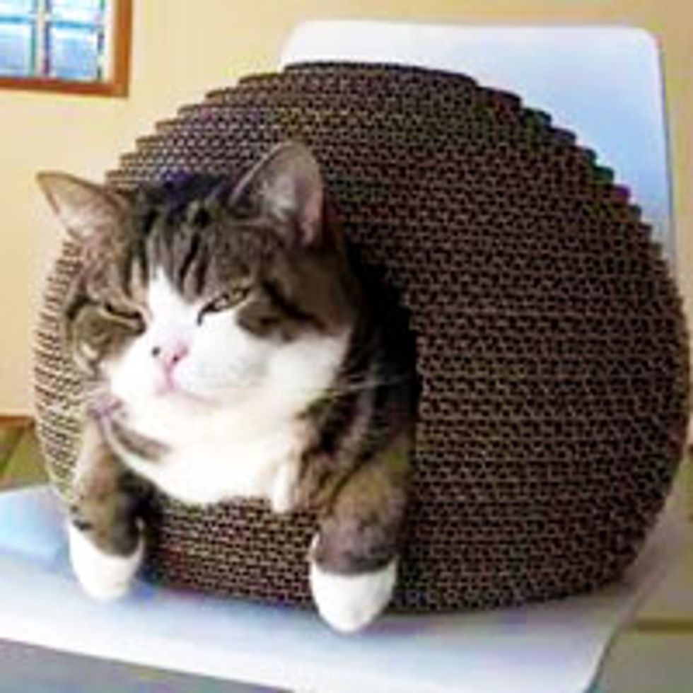 Maru Discovers Kamakura Cat House